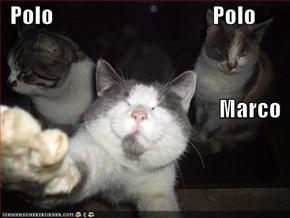 Polo                                   Polo Marco