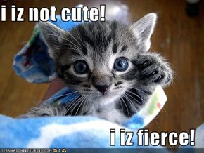i iz not cute!  i iz fierce!