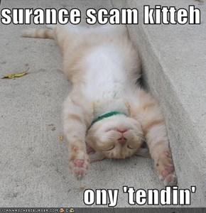 surance scam kitteh  ony 'tendin'
