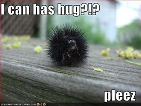 I can has hug?!?  pleez