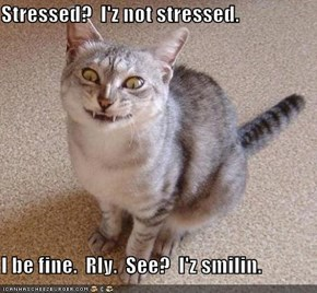 Stressed?  I'z not stressed.  I be fine.  Rly.  See?  I'z smilin.