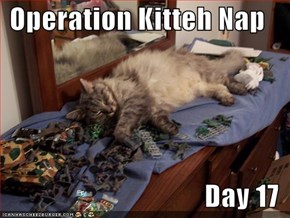 Operation Kitteh Nap  Day 17