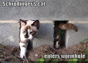 Schrodinger's cat  enters wormhole