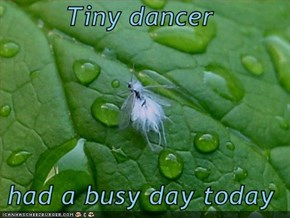 Tiny dancer  had a busy day today