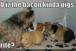 U iz the bacon kinda pigs  rite?