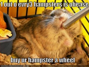 1 out o evry3 hampsters is obease  buy ur hampster a wheel