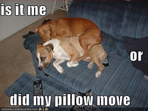 is it me  or did my pillow move