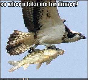so wher u takn me for dinner?