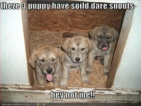 theze 3 puppy have soild dare snouts       hey not me!!