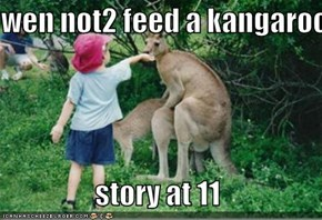 wen not2 feed a kangaroo   story at 11