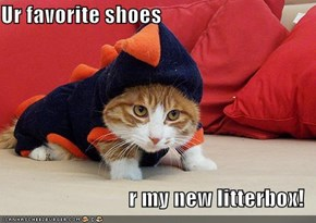 Ur favorite shoes  r my new litterbox!