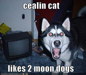 cealin cat   likes 2 moon dogs