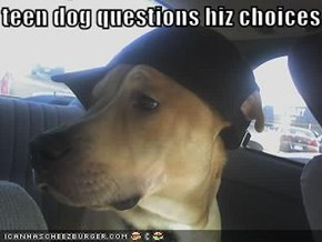 teen dog questions hiz choices