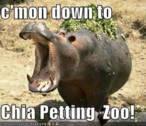 c'mon down to  Chia Petting  Zoo!