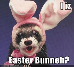 I iz  Easter Bunneh?