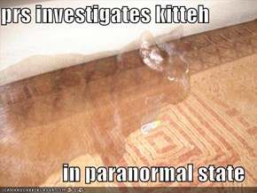 prs investigates kitteh  in paranormal state