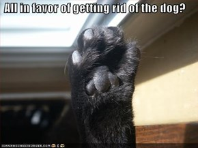 All in favor of getting rid of the dog?