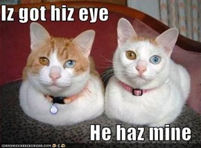 Iz got hiz eye  He haz mine