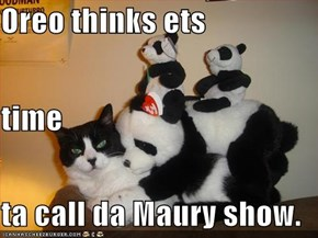 Oreo thinks ets time  ta call da Maury show.