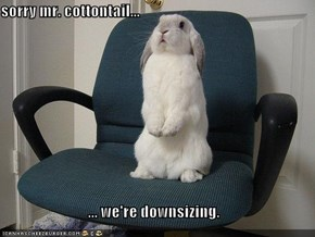 sorry mr. cottontail...  ... we're downsizing.