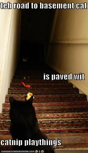 teh road to basement cat is paved wit catnip playthings