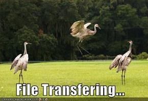 File Transfering...