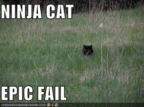 NINJA CAT  EPIC FAIL