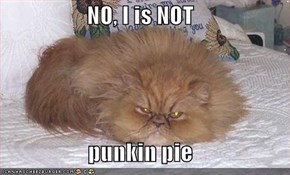 NO, I is NOT  punkin pie