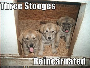 Three Stooges  Reincarnated