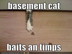 basement cat  baits an timps