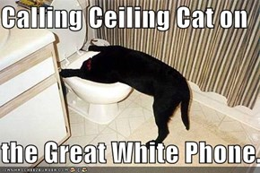 Calling Ceiling Cat on   the Great White Phone...