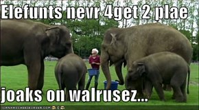 Elefunts nevr 4get 2 plae  joaks on walrusez...