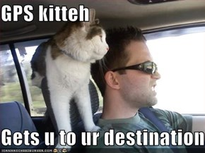 GPS kitteh  Gets u to ur destination