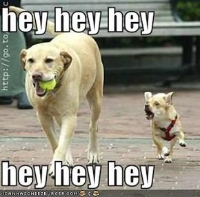 hey hey hey   hey hey hey