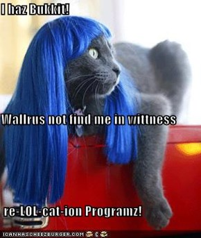 I haz Bukkit!  Wallrus not find me in wittness   re-LOL-cat-ion Programz!