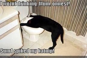 I woznt drinking, Mum, onnest!   Sum1 spiked my katnip!