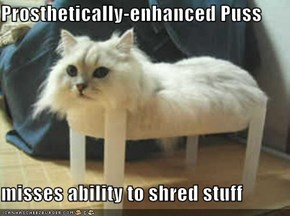 Prosthetically-enhanced Puss  misses ability to shred stuff