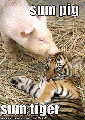 sum pig  sum tiger