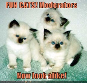 FUN CATS! Moderators  Now look alike!