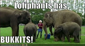 Loliphants has  BUKKITS!