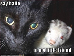 say hallo  to my little friend