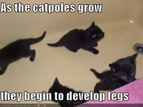 As the catpoles grow  they begin to develop legs