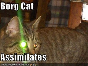 Borg Cat  Assimilates