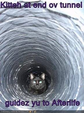 Kitteh at end ov tunnel    guidez yu to Afterlife
