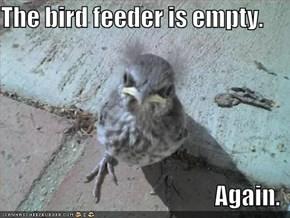 The bird feeder is empty.  Again.