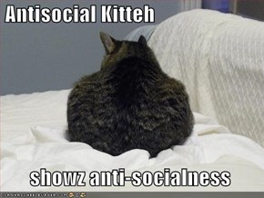 Antisocial Kitteh         showz anti-socialness