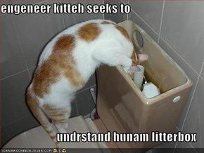 engeneer kitteh seeks to  undrstand hunam litterbox