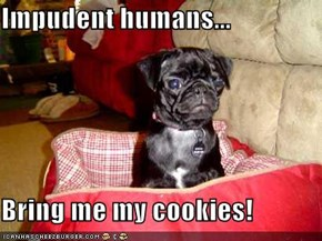 Impudent humans...  Bring me my cookies!