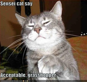 Sensei cat say  Acceptable, grasshopper