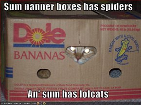 Sum nanner boxes has spiders  An' sum has lolcats